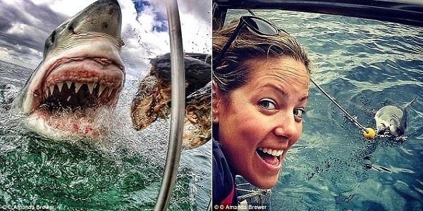 """Khi đến đảo Mossel, du khách có thể ngắm cá mập do HLV Amanda Brewer (phải) thuần hóa ở khoảng cách chỉ vài mét. Amanda đang cho """"quái vật"""" khổng lồ ăn từ trên tàu."""