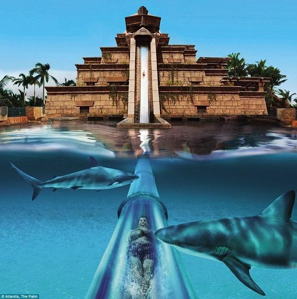 """Đến với công viên Leap of Faith, du khách sẽ được trải nghiệm nỗi sợ hãi """"2 trong 1"""": Trượt tự do trên một đường ống thẳng đứng cao 27,5 mét và đâm thẳng xuống một hồ đầy cá mập."""