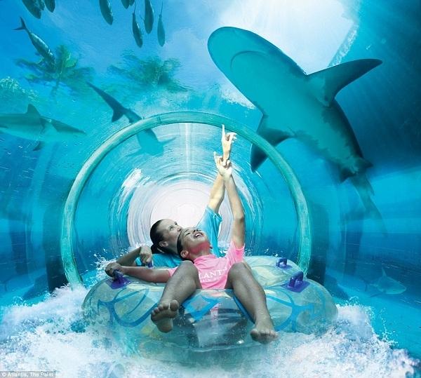 Du khách sẽ được trượt qua một đường hầm trong suốt đặt trong một chiếc hồ lớn với những kẻ săn mồi ở xung quanh.