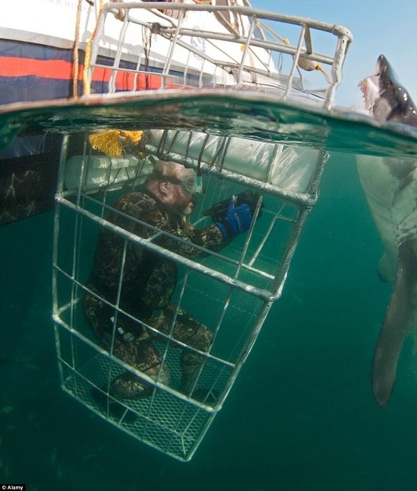 Là ngôi nhà lớn của cá mập trắng, Gansbaai nên được cho vào danh sách các nơi phải đến của những người thích cảm giác mạnh.