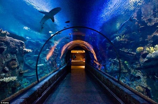 Ấn tượng nhất là mô hình tàu đắm khổng lồ, nơi du khách có thể ngắm cá mập theo một góc nhìn 360 độ khi đi bộ trong đường hầm trong suốt.