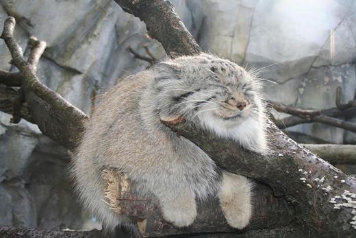 Có một con mèo vắt vẻo trên cây...
