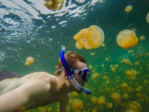 Bơi lặn giữa hàng nghìn con sứa tại Hồ Sứa ở Eil Malk Island, Palau.