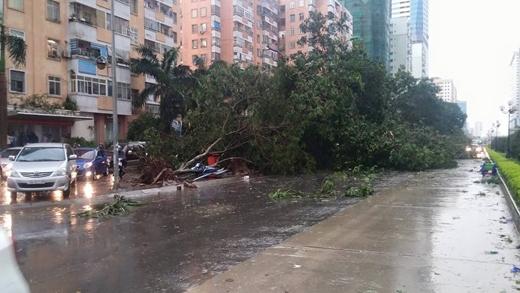Hà Nội: Mưa gió kinh hoàng, nhiều cây xanh ngã đè lên người đi đường