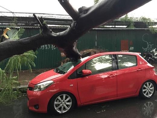 Mưa lớn kèm theo gió giật mạnh khiến hàng loạt cây xanh ngã ra đường đè lên nhiều phương tiện