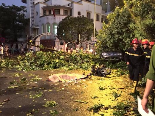 Hiện trường vụ cây xanh đè chết một người đàn ông đang chạy trên đường tại ngã tưQuang Trung- Nguyễn Du.