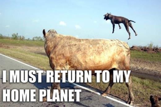 Tôi phải quay về hành tinh của mình vì nhiệm vụ chăn bò đã xong xuôi rồi!