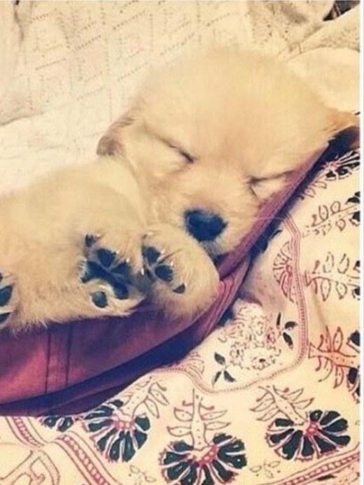 Tôi ngủ đây! Hẹn gặp lại các bạn trong mơ!