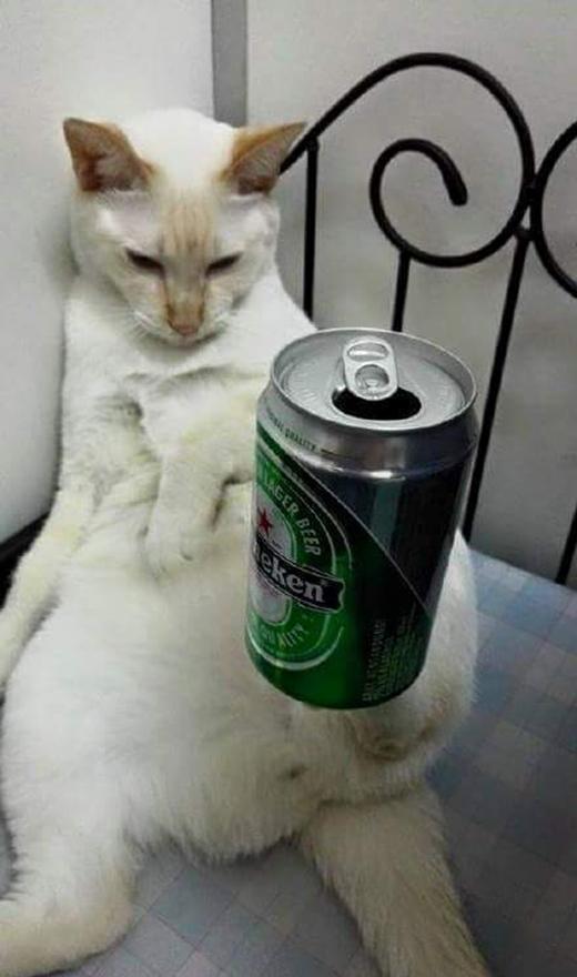 """Có vẻ như chuyện giữ thăng bằng các đồ vật chỉ là """"chuyện cỏn con"""" đối với chú mèo này. Nhiều người yêu thích loài mèo đã tặng cho chú mèo """"ảo thuật gia"""" này những nickname rất đáng yêu như Supercat, David Miu..."""