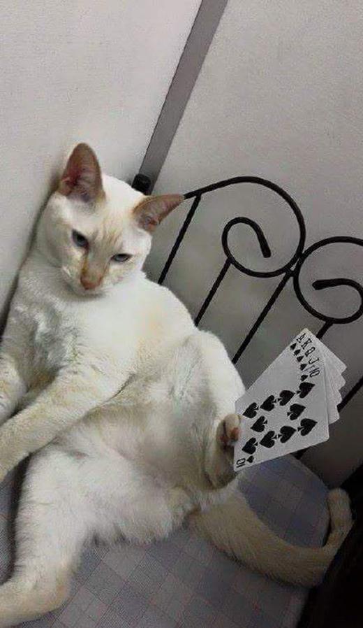 """Chú mèo """"ảo thuật gia"""" với tài giữ thăng bằng không thể tưởng tượng"""