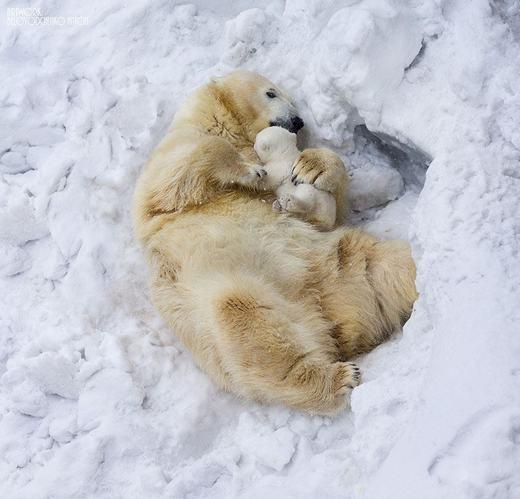 Còn đây là bé gấu sơ sinh.