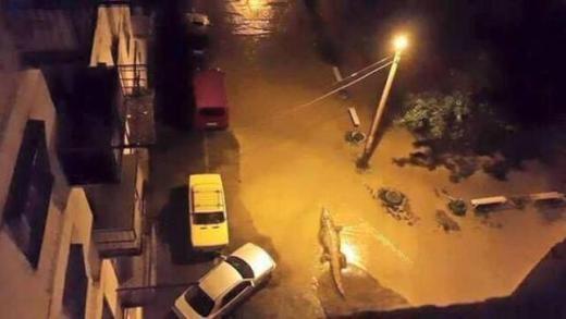 Một con cá sấu đang thoải mái bơi lội trên đường phố Tbilisi.