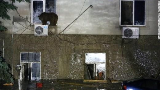 Hình ảnh một chú gấu đang cố gắng trèo vào nhà một người dân thông qua cửa sổ.