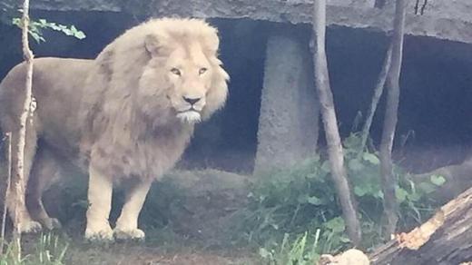 Trận lũ đã làm hư hỏng vườn thú và phá hủy nơi ở của động vật khiến chúng tràn ra ngoài đường. Những loại động vật nguy hiểm như sư tử cũng được thấy trên các con phố ở Tbilisi.