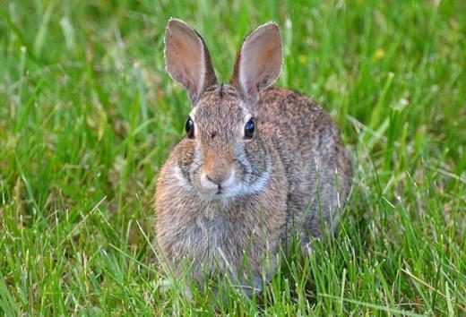 Vào khoảng những năm 1800, đã có 24 con thỏ được thả vào môi trường tự nhiên ở Úc, và chỉ trong vài thập kỷ qua, chúng đã giao phối và sinh sản đến hơn… 10 tỉ thế hệ con cháu.