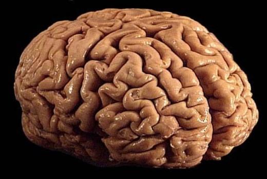 Bộ não của ban chỉ sử dụng 20% lượng calo và ôxy trong cơ thể bạn.