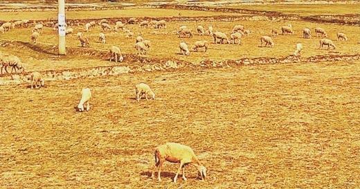 Trước đó hạn hán khiến các cánh đồng trở nên hoang tàn không một cây cỏ sống sót