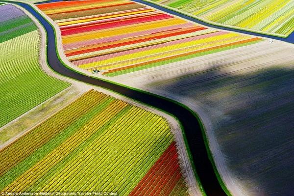 Nghệ thuật chụp ảnh drone đã chuyển tải trọn vẹn vẻ đẹp khó cưỡng của cánh đồng tulip rực rỡ sắc màu gần thị trấn Voorhout, Hà Lan.