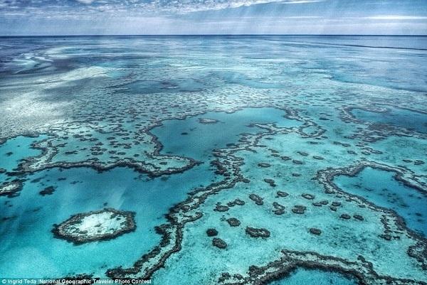 Để có được bức ảnh sắc nét của rạn san hô Great Barrier này, nhiếp ảnh gia Ingrid Teda đã phải bay đến đảo Hamilton xinh đẹp.