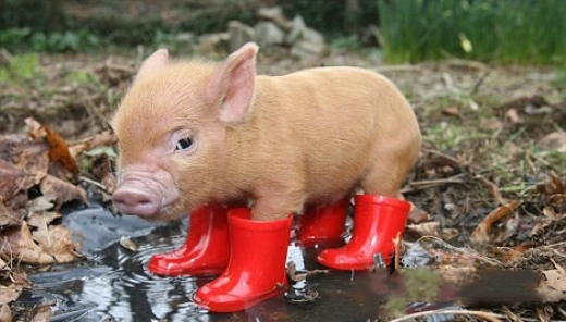Hãy đảm bảo rằng mình vẫn đẹp long lanh trong mưa nhé!