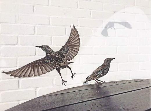 Bức ảnh đạt giải nhì, Cafe Birds, được chụp trong một quán cà phê ở Dorset, một thị trấn miền Nam nước Anh.