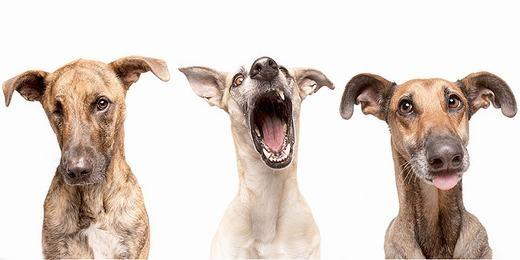 Elke có 3 chú chó dễ thương, có tên lần lượt là Loli, Scout và Noodles (từ trái sang phải). Tất cả đều được cứu về trong tình trạng suýt chết.