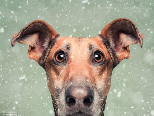 Những chú chó này trở thành chủ đề chính trong bộ ảnh về các chú chó của Elke.