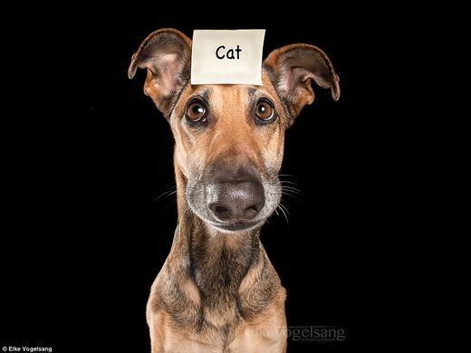 Elke cũng thích chụp khá nhiều ảnh hài hước về chó mèo. Trong hình là Noodles.