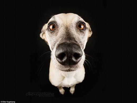 Thích thú với biểu cảm đáng yêu của những chú chó trước ống kính máy ảnh