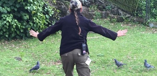 """Hài hước trào lưu huấn luyện thú ăn theo """"Công viên khủng long"""""""