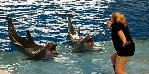 Những chú cá heo có vẻ thích thú trước màn huấn luyện của nữ huấn luyện viên
