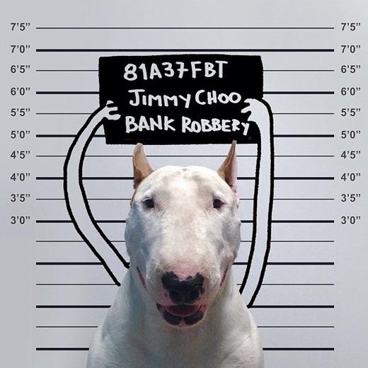 Thích thú trước những hình ảnh biếm họa ngộ nghĩnh của chú chó Bull