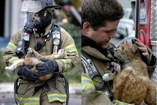 Chú mèo này đã may mắn được một người lính cứu hỏa cứu thoát khỏi trận hỏa hoạn.