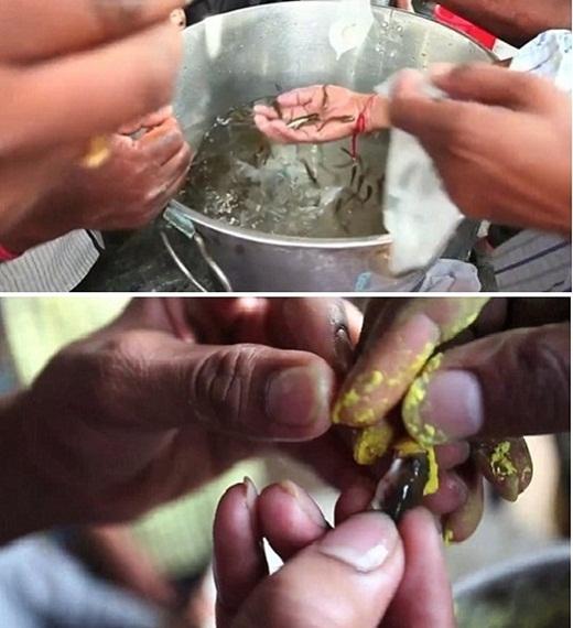Kinh hoàng chữa bệnh hen bằng cách… nuốt cá sống