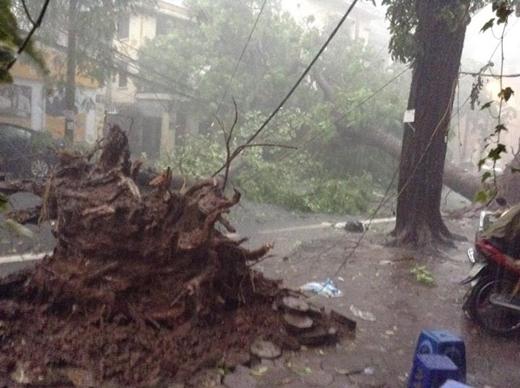 Trận mưa gió kinh hoàng vừa rồi tại Hà Nội