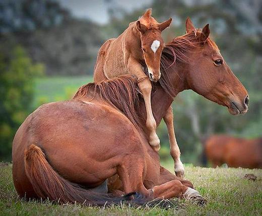 """Chú ngựa con sẽ lớn rất nhanh và không còn """"nghịch ngợm"""" như thế này nữa."""