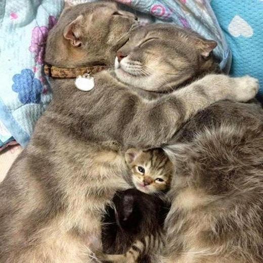 Nhà mèo thương nhau.