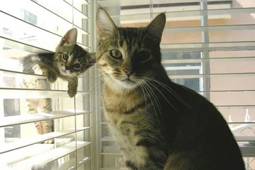 """""""Phi vụ đột nhập"""" của nhà mèo đã bị phát hiện."""