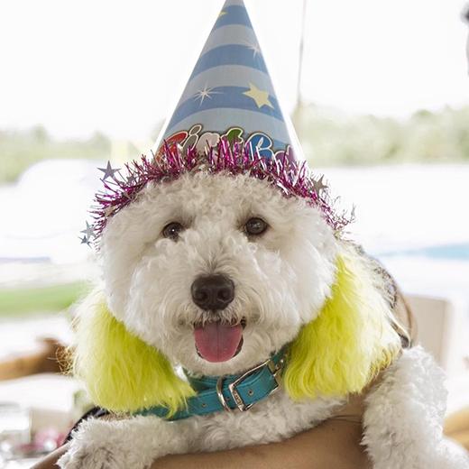 Chú cún cưng cũng được diện đồ đẹp tham dự sinh nhật bé Heo. - Tin sao Viet - Tin tuc sao Viet - Scandal sao Viet - Tin tuc cua Sao - Tin cua Sao