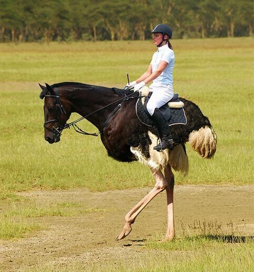 Gọi nó là ngựa đà điểu được không nhỉ.