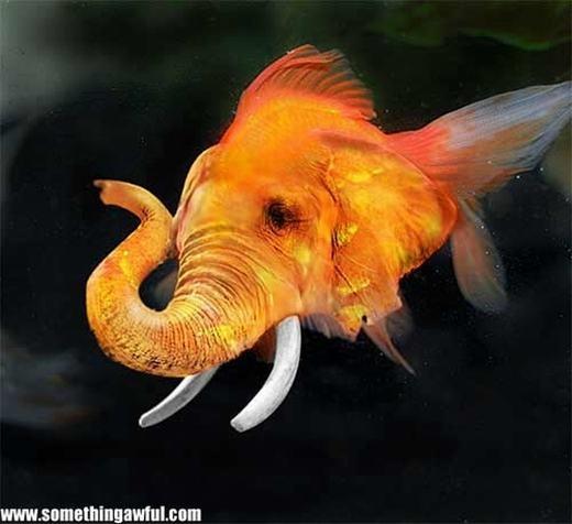 Có thể gọi đây là cá voi được không nhỉ?