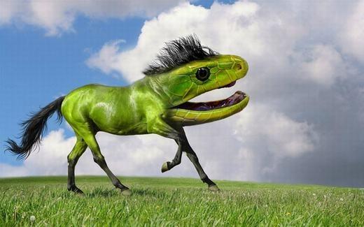 Cười sặc sụa với loạt ảnh động vật lai tạo bằng photoshop