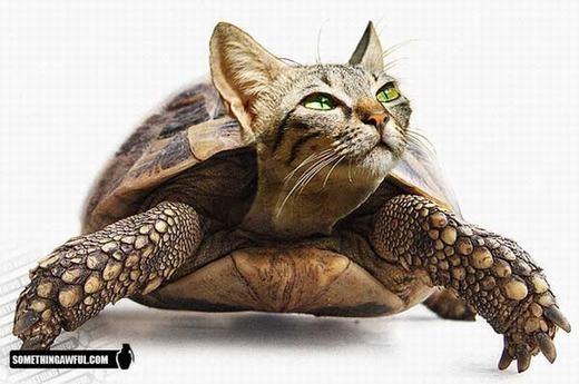Chắc mèo sẽ không chịu đi chậm như rùa đâu nhỉ?