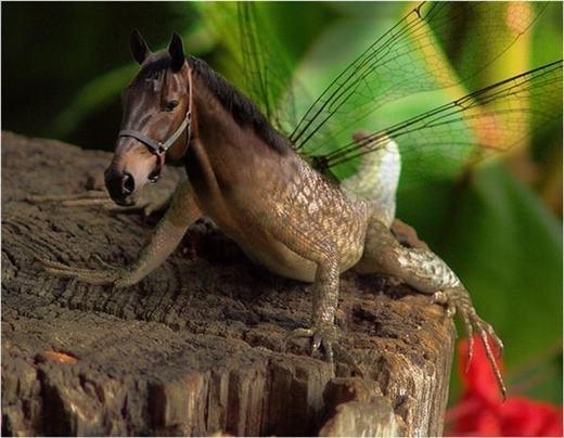... và ngựa thằn lằn. Bạn chắc sẽ không thể tưởng tượng ra.
