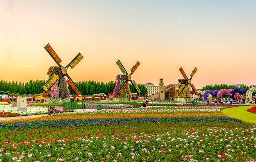 Với diện tích khoảng 70.000 m2 cùng hơn 45 triệu bông hoa đủ màu sắc, Dubai Miracle Garden được công nhận là vườn hoa lớn nhất thế giới. Với nhiều du khách, vườn hoa này thực sự là một điều kỳ diệu khi mà nó có thể hình thành ngay giữa sa mạc khô cằn.