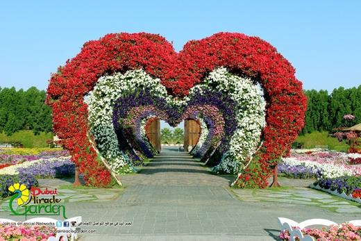 Có tên gọi là Dubai Miracle Garden, vườn hoa này là niềm tự hào của người dân Dubai đối với bạn bè thế giới.