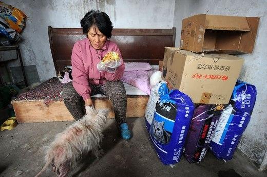Cảm động với cô giáo bất chấp hoàn cảnh để cứu sống hơn 100 chú chó