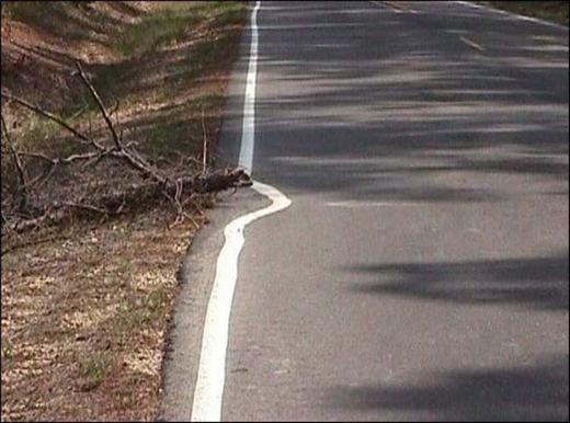 Thôi thì đành né cành cây đi vậy!