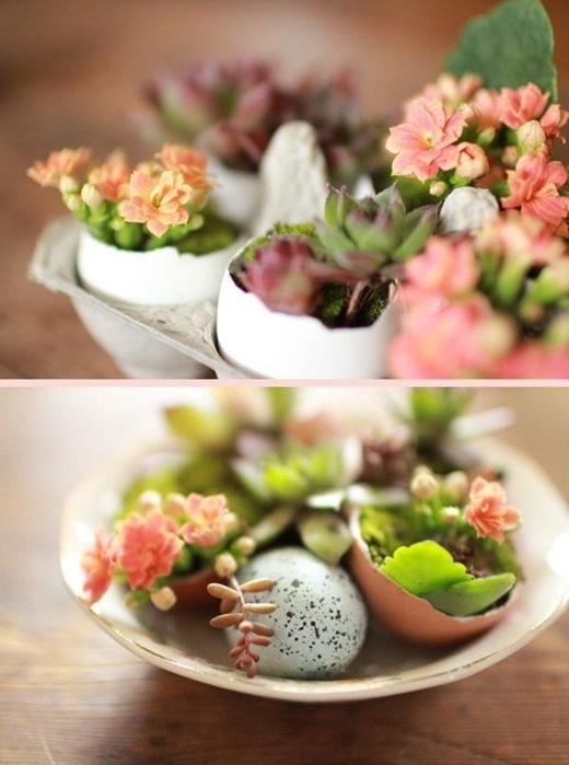Hoặc là bạn hãy tận dụng vỏ trứng làm những chậu cây tí hon thế này đi, bàn học của bạn sẽ trông cực kì bắt mắt đấy!