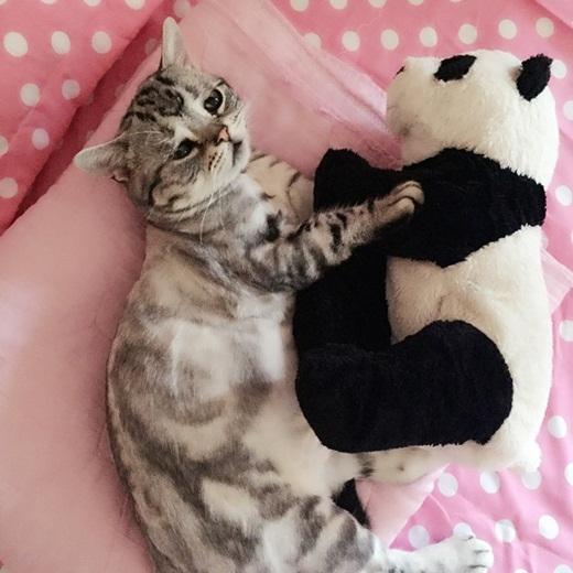 Tan chảy với chú mèo nhỏ có gương mặt buồn như mất sổ gạo